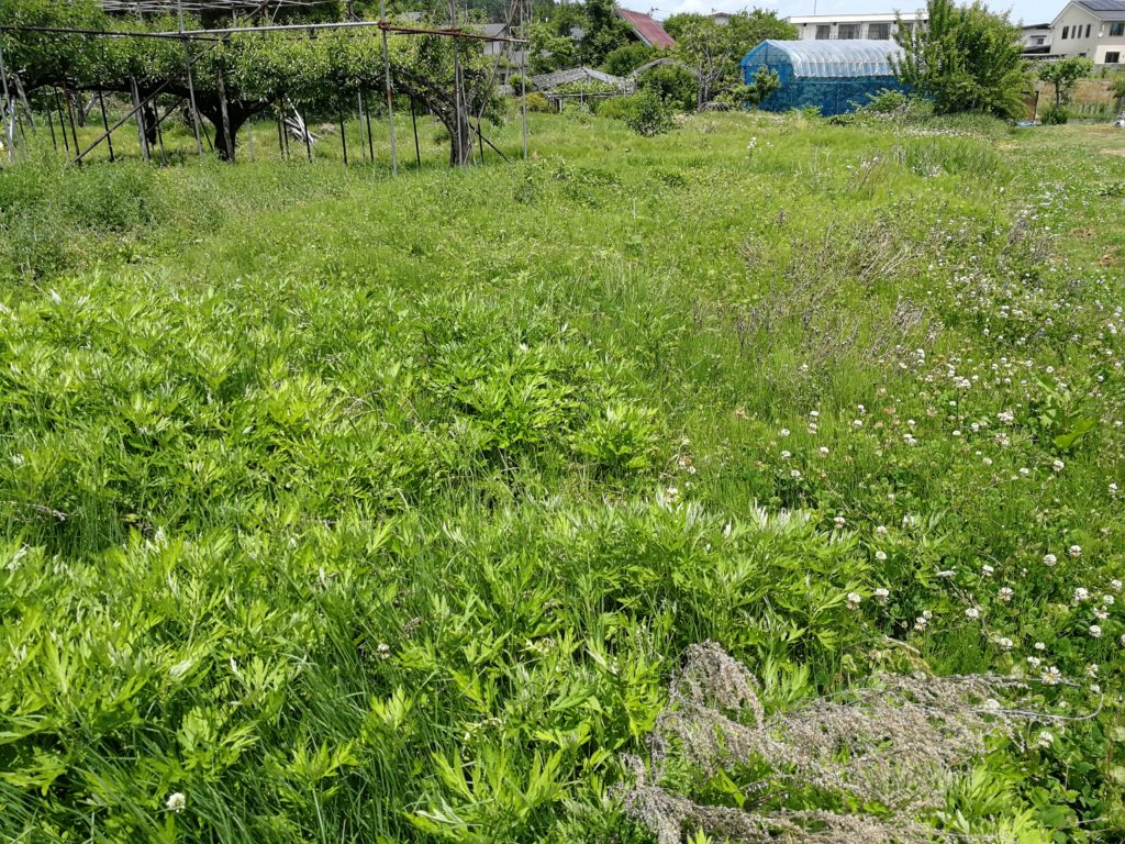 耕作放棄地1