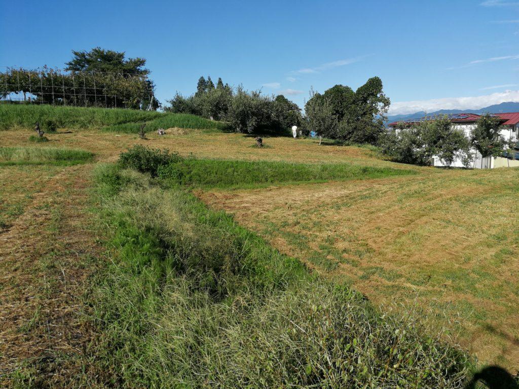 耕作放棄地150-2