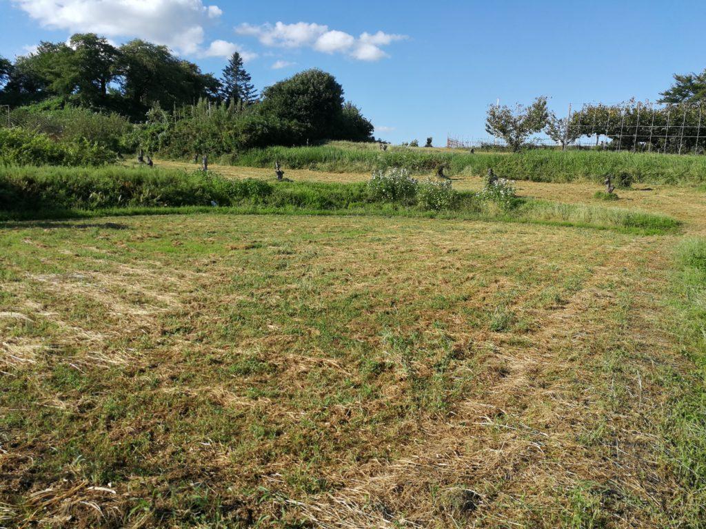 耕作放棄地150ー1