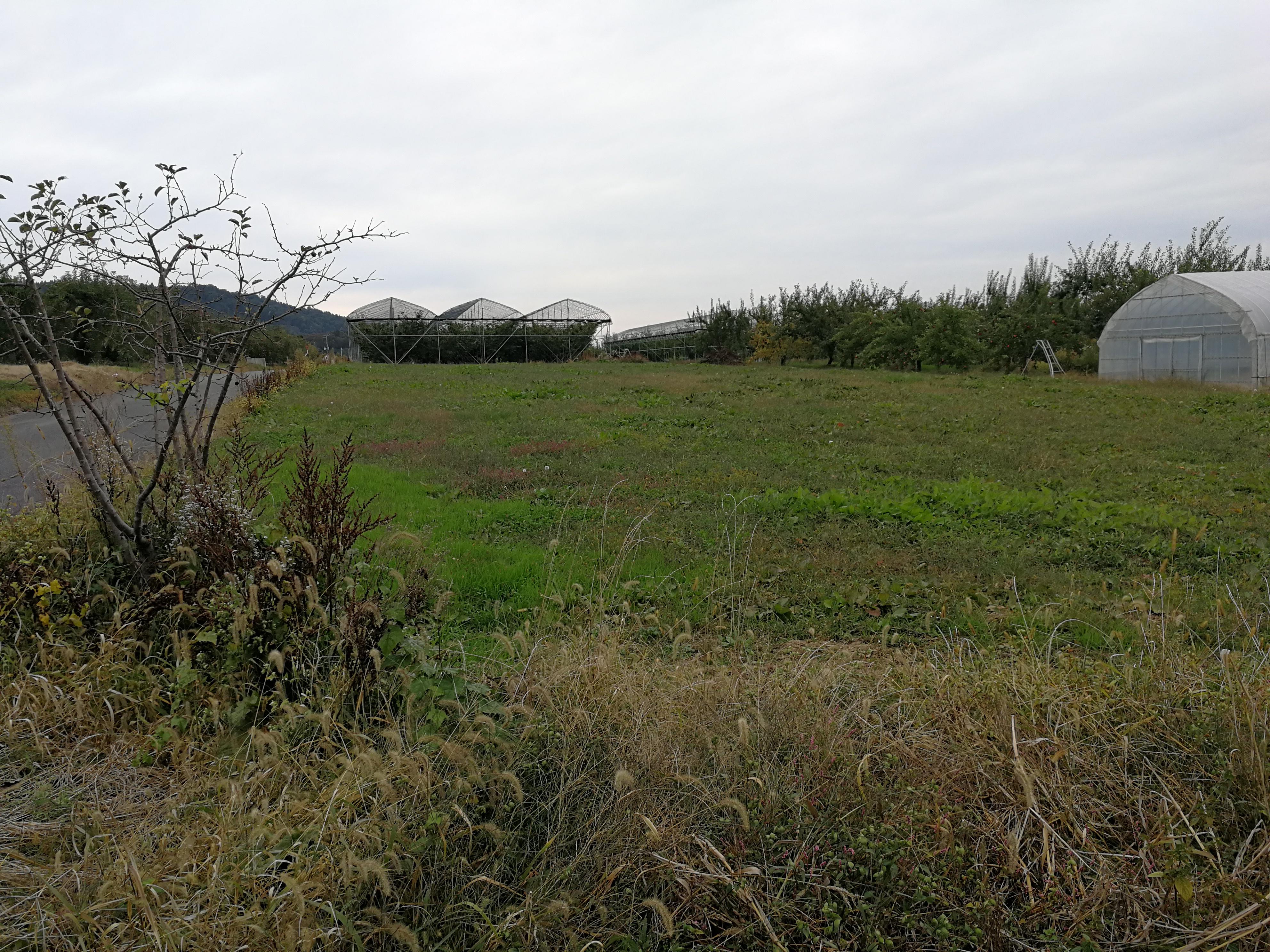 シェアリング畑