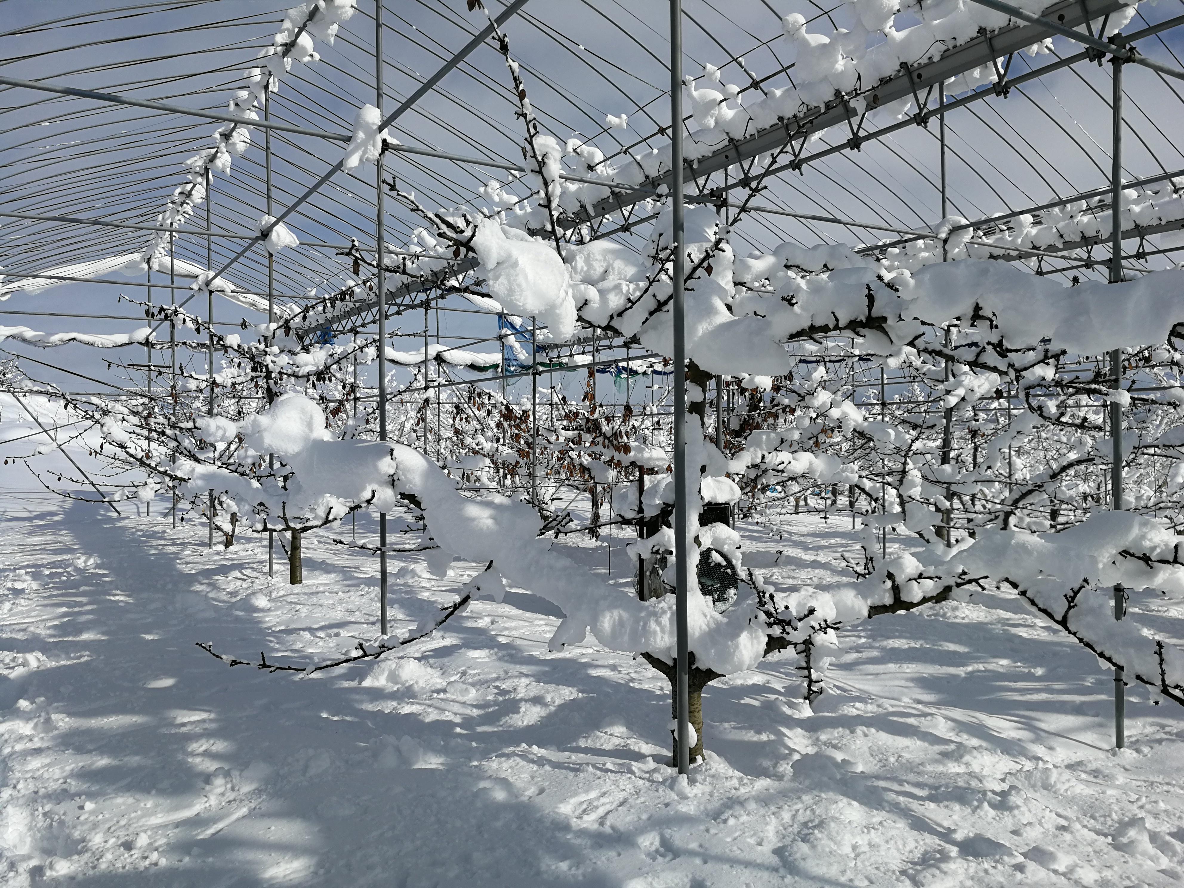 2021年正月大雪2
